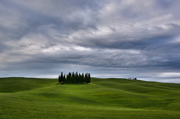 Stand of Cypress Trees