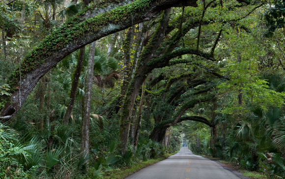 Canopy Road - Old Dixie Hwy & Scott Kadlec Photography   Florida and Southeast U.S.   Canopy Road ...