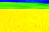 Wheat Field Abstract