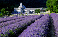 Lavender Fields at Abbey de Senanque - Provence